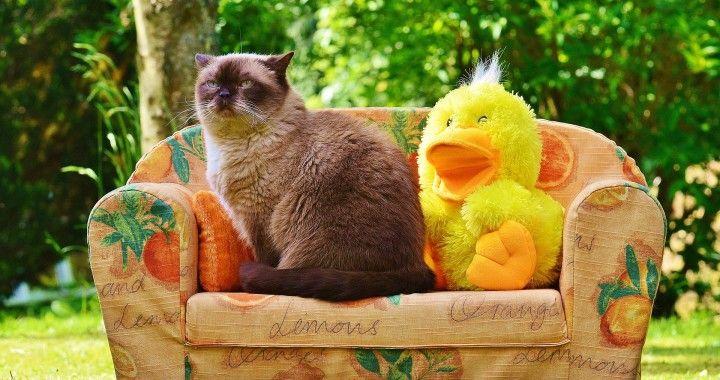 kitty on the sofa
