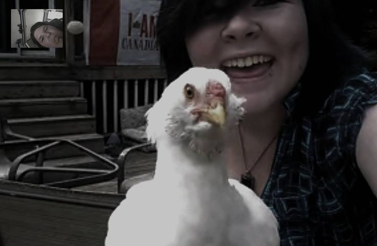 Selfies with the chickens are the best selfies. • • • {Tags; grunge #goth #emo #scene #punk #hipster #chicken #selfie #chickenselfie #filter #theme #selfie #tagsforlikes #tags4likes #theme} http://butimag.com/ipost/1558380356623920024/?code=BWgeq19g-uY