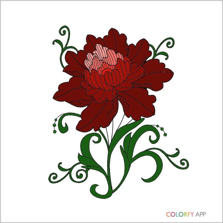 Itunesapple Us App Colorfy Coloring BooksItunesFloralApple