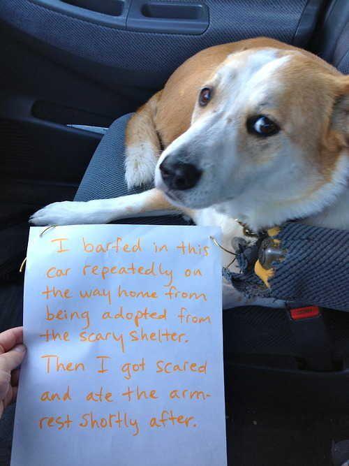 pet shaming is my favorite.