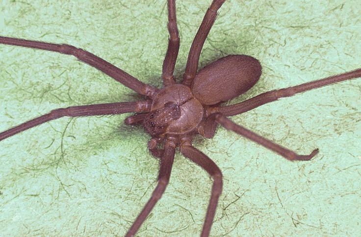 Here's How to Effectively Treat a Bite from a Brown Recluse Spider
