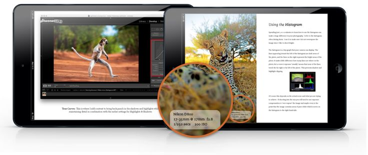Wildlife Photography Tips by Shannon Wild