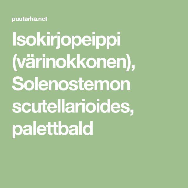 Isokirjopeippi (värinokkonen), Solenostemon scutellarioides, palettbald