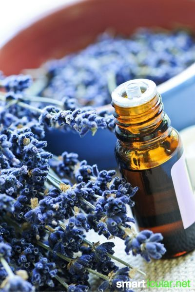 Das ätherische Öl der Lavendelpflanze ist gut für Gesundheit und Entspannung. Es ist sehr vielseitig einsetzbar: wir zeigen dir unsere Lieblingsanwendungen