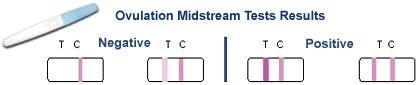 Ovulation Testing: How Ovulation Predictor Kits Work | Ovulation Calculator | Page 3
