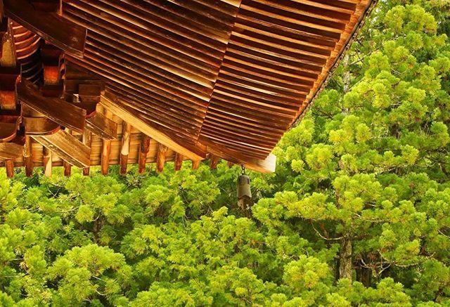 """📷by @ikkikuma 👌🔥 ・・・ Japon 13/20. Dans le manga Vagabond, de Takehiko Inoue, Miyamoto Musashi longe une forêt luxuriante. Il s'exclame : """"Comme le seigneur de cette province doit être sage!"""" À son compagnon qui l'interroge, il précise : """"Tous les arbres de cette forêt sont d'un bel âge, cela montre que cette région a été épargné par la guerre."""" • Koyasan • août 2017. . Japan 13/20. In the manga Vagabond, drawn by Takehiko Inoue, a famous samurai named Miyamoto Musashi walks along a…"""