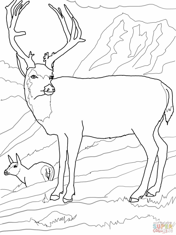 Moose Deer Coloring Pages Pinterest