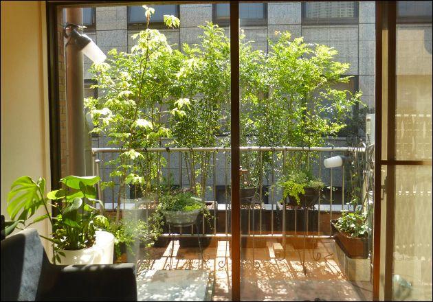 バルコニーへのプランター植栽で美しい目隠しを 港区マンションn様邸 ベランダ 植物 ベランダ 目隠し 植物 庭