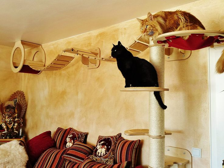 die besten 25 gro e katzen ideen auf pinterest panther wild life und dschungeltiere. Black Bedroom Furniture Sets. Home Design Ideas
