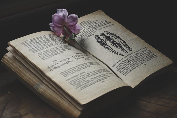 Forever a student | herbalism | folklore | Spiritwoods