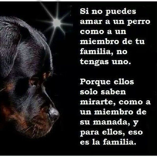 Amor a los animales - Love of animals