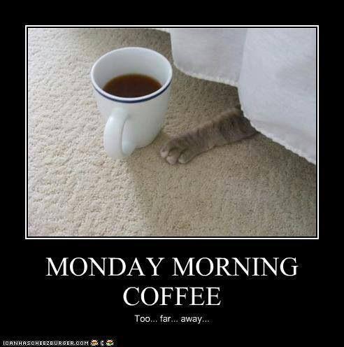coffee mon cat