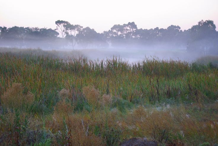 Cool mists enhance colours of grasses