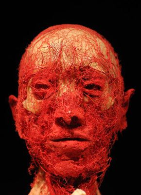 "Nervous System. Gunther von Hagens' often-controversial ""Body Worlds and the Mirror of Time"" exhibition shows us just how many nerves cover the face and head of a human. The exhibit demonstrates the various systems and functions of the human body."