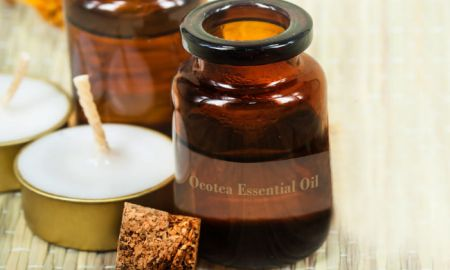 Uses And Benefits Of Ocotea Essential Oil