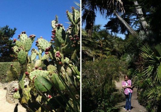Cactussen in de tropische botanische tuin Jardin Georges de la Selle op Ile de Batz