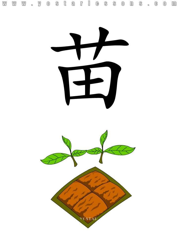 苗 = sprout. Imagine two sprouts growing beside the farmland. Detailed Chinese Lessons @ www.yostarlessons.com