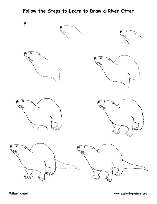 226 best Loutres images on Pinterest | Otters, Otter and Drawings