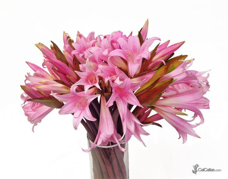 40 best images about calcallas bouquets on pinterest for Bouquet amaryllis