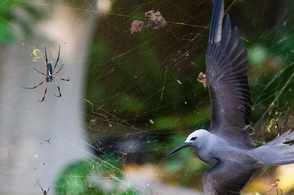 A bird in a spiders nest.