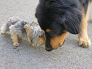 unerwünschtes Jagdverhalten Jagdtrieb jagende wildernde Hunde Erziehungstipps Antijagdtraining Jagdinstinkt Hunden