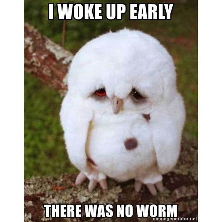Missing Worm Time Https Onlineclock Net Sleep Cute Bed Sotrue Relatable Tired Night Goodnight Sweetdreams Owl Meme Funny Owls Cute Baby Animals