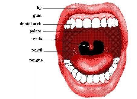 Angina Throat Symptoms