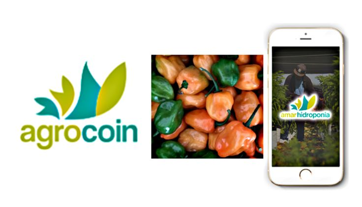 With a franchise business model, Amar Hidroponia and its own cryptocurrency Agrocoin is a case of successful blockchain entrepreneurship and about which we will talk here. Amar Hidroponia is defined as a company dedicated to promoting the practice of agriculture in hydroponics processes, through...