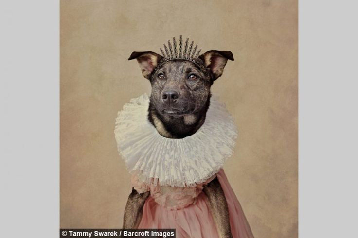 Would you believe these Stylish Dogs were actually abandoned? – Cuteness…