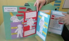 Nutrición. Lapbook Sistema Circulatorio