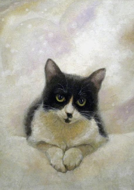 Cat by Alan Albegov.( Paihia, New Zealand)