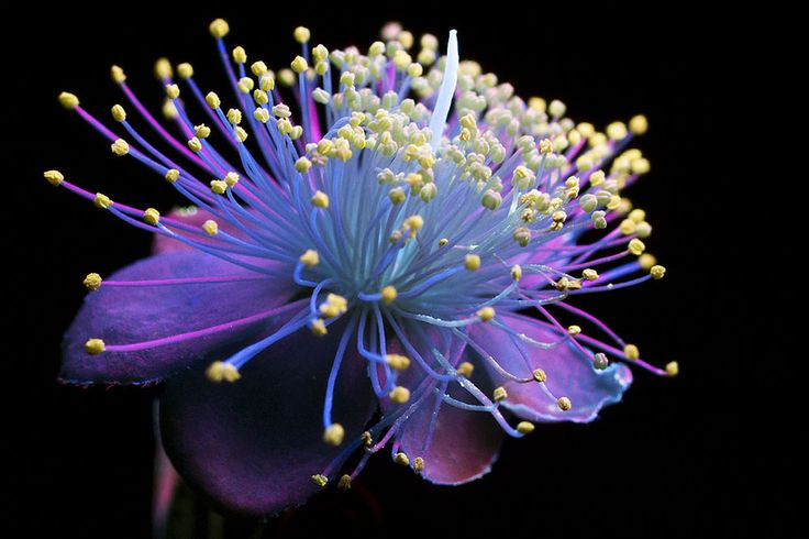 """28-year-old photographerCraig Burrowsphotographs plants and flowers using a type a photography called UVIVF or """"ultraviolet-induced visible fluorescence."""" If you haven't heard of it, that's not a surprise, as it is a relatively unknown process which brings out the glowing fluoresce in plant matter"""
