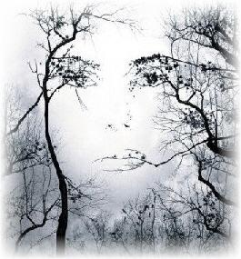 Gaia: Trees Art, Female Faces, Natural Beautiful, Open Spaces, The Faces, Trees Faces, Optical Illusions Art, Photo, Mothers Natural
