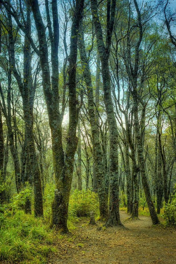 El boscoso camino al pie del volcán Malintzin. Asombrosos paisajes naturales que se disfrutan en #Puebla y #Tlaxcala, #Mexico.