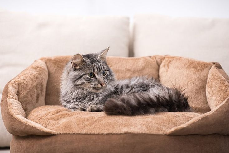 Best Cat Beds Our Top 5 Choices Cat Bed Large Cat Breeds Cats