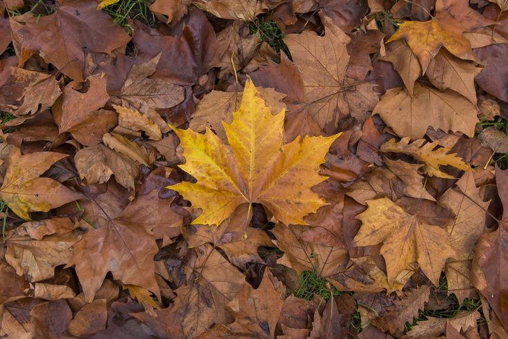 #Autumn #Leaves in #London. If you need any help around your property Melchior Gray is a London-based property maintenance company. We specialise in responsive maintenance, painting/decorating & small building projects. Call our team today on 020 7731 2100 www.melchiorgray.co.uk