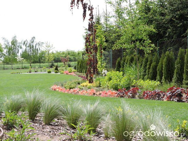Zielonej ogrodniczki marzenie o zielonym ogrodzie - strona 691 - Forum ogrodnicze - Ogrodowisko