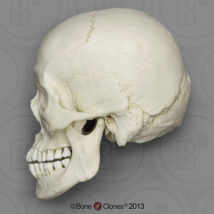 14 best Skulls & Bones images on Pinterest | Skulls, Bones and Dice