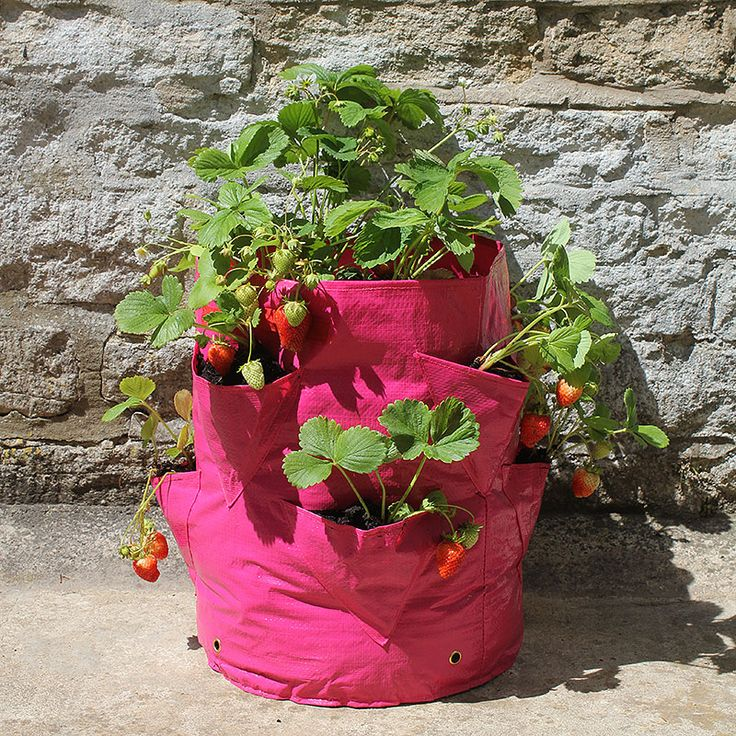 Ört- och jordgubbsodlingssäck, 2-pack, Odlingssäck för odling av örter och jordgubbar på balkong och terrass