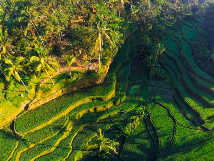 Flying a drone in Indonesia and Bali