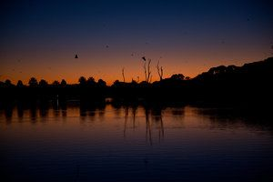 centennial-park-sydney-sunset photography by chantelle coutinho for lightroomdarkroom