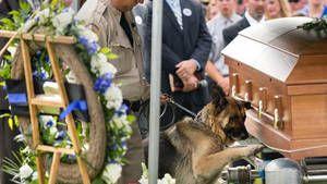 Le chien Figo est attristé de la perte de son partenaire, Jason Ellis, et pose sa patte sur son cercueil