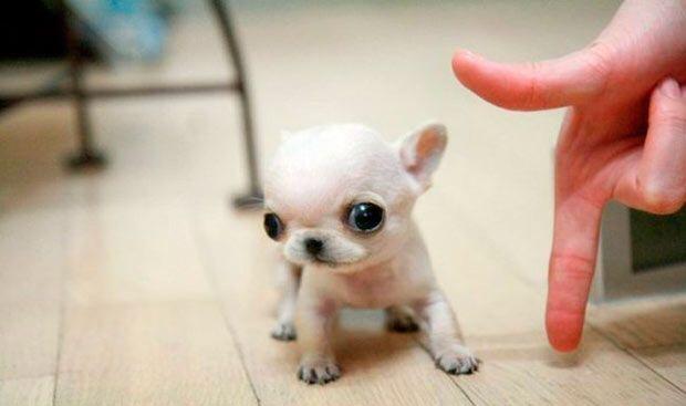 Que miniaturita