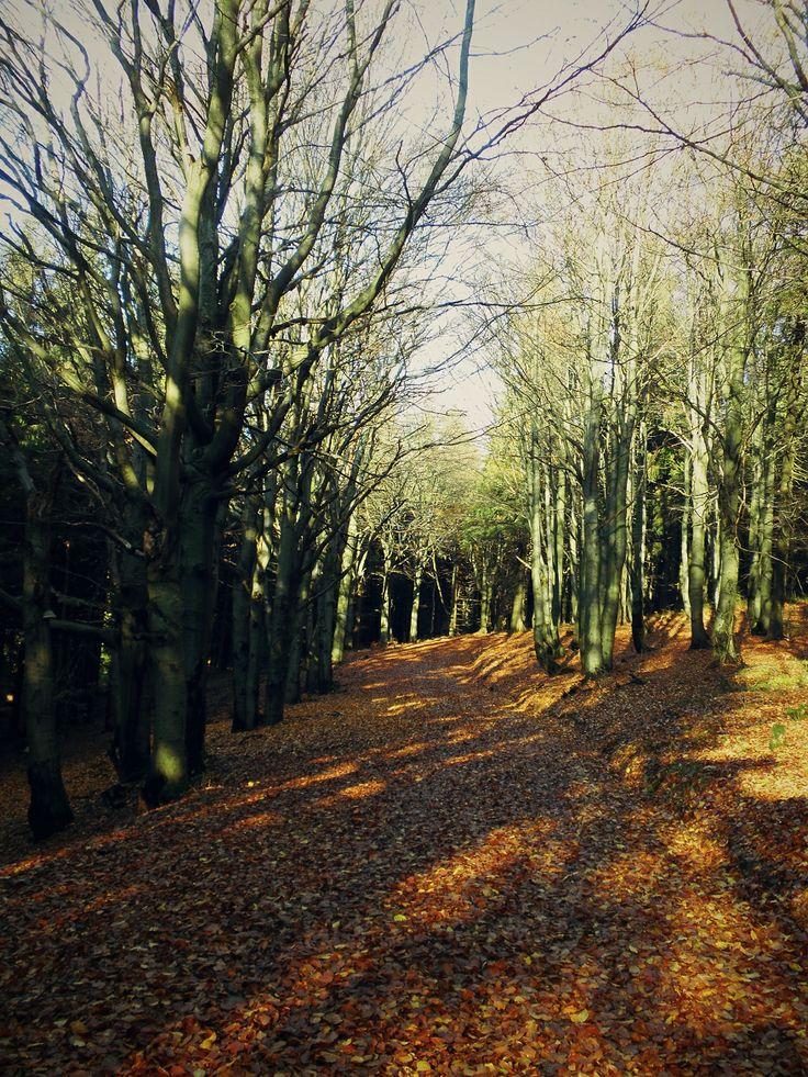 autumn memories #eastbohemia #czechrepublic