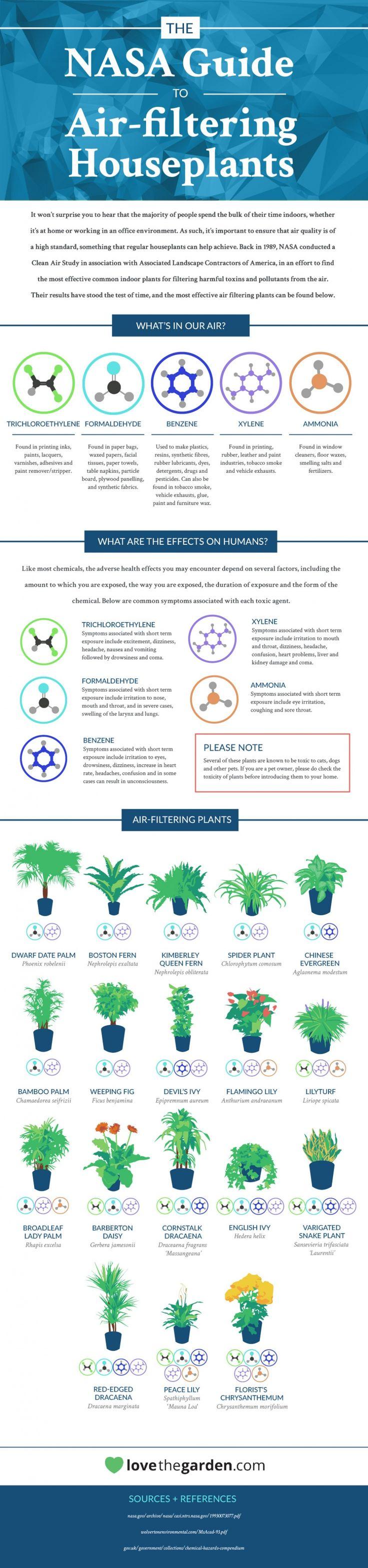 #Infografía. Las mejores plantas para purificar el aire. By NASA