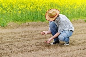 a-farmer-adding-fertilizer-to-his-soil