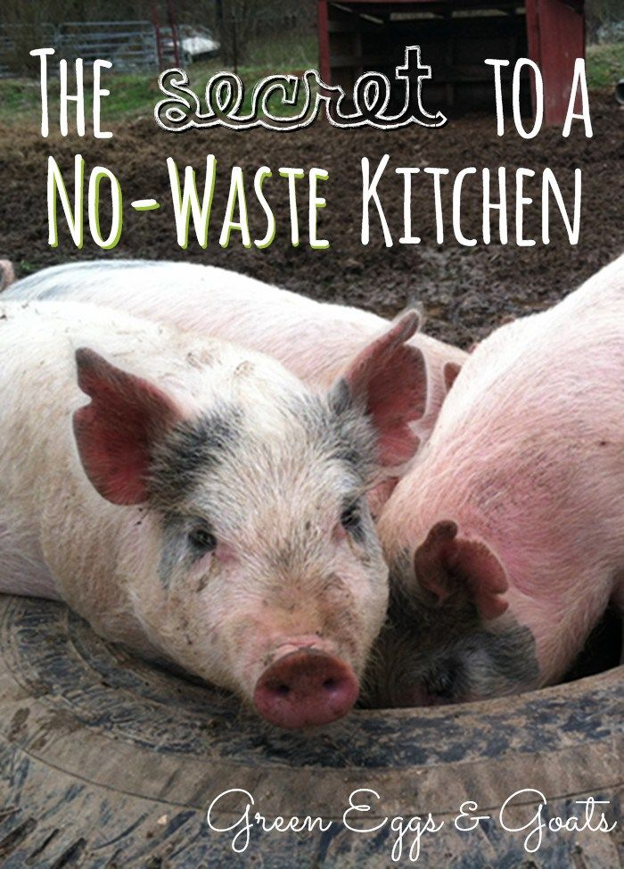 Don't waste anything from your kitchen, not even your garbage! #pioneersettler
