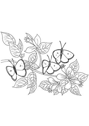ausmalbild schmetterlinge 3 with images | colorful butterflies, embroidery, butterfly