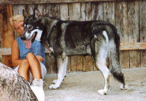 2198 State Route 136 – Hillsboro, Ohio – 45133 Phone: (937)927-5614 #german #shepherd,german #shepherds,german #shepherd #pups,german #shepherd #puppy, #german #shepherd #puppies,german #shepherd #puppies #for #sale,german #shepherd #puppies #for #training,german #shepherds #for #therapy,german #shepherd #for #service #dogs,white #german #shepherd,white #german #shepherds,white #german #shepherd #pups,white #german #shepherd #puppy,white #german #shepherd #puppies,white #german #shepherd…