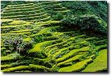 Actually saw these rice terraces in the Philippines when I was 8 years old. Would love to go again.